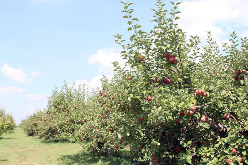 Fishkill Farms Apple Orchard, NY