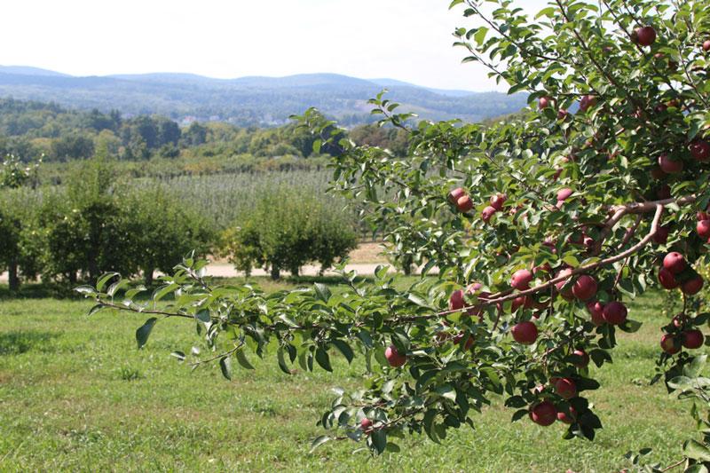Fishkill Farms Apple Orchard, NY