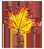 autumnleaves4-100